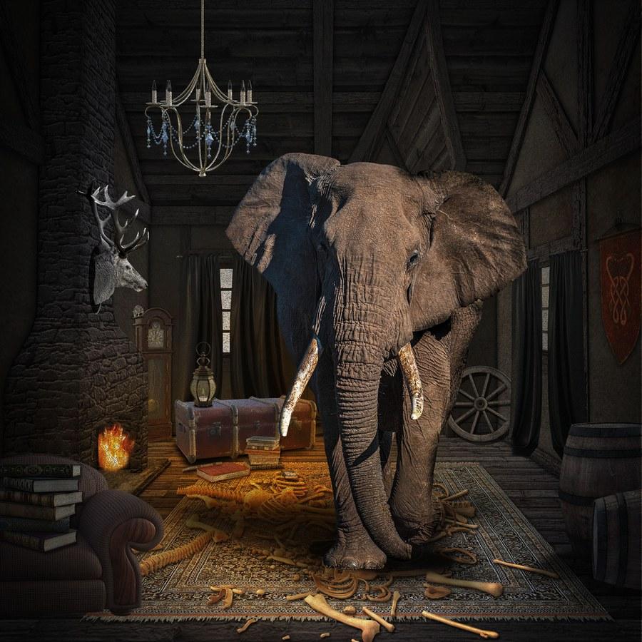 elephant-5547467_1920.jpg