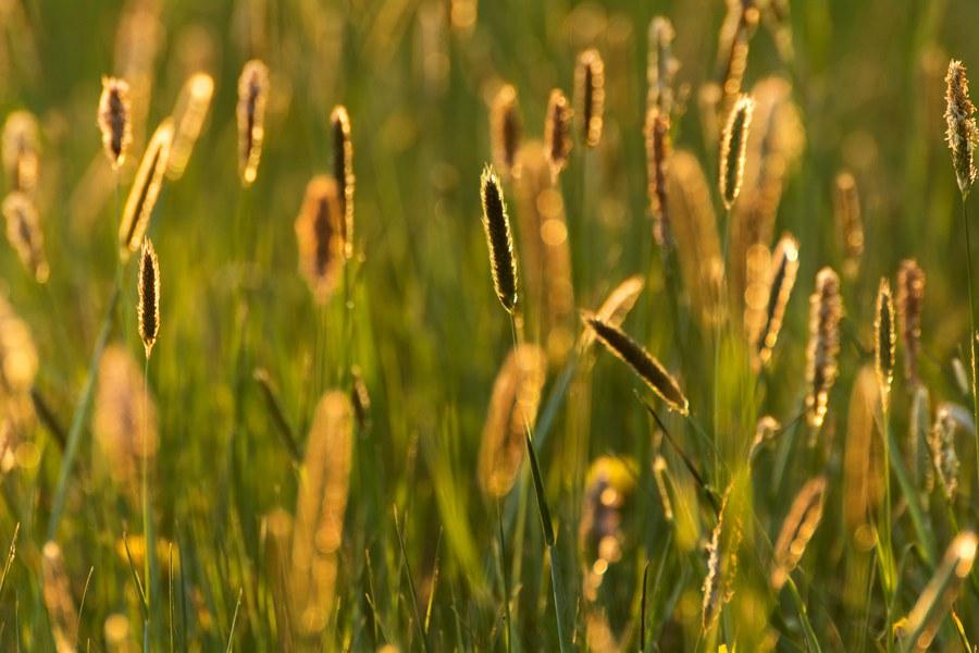 nature-background.jpg